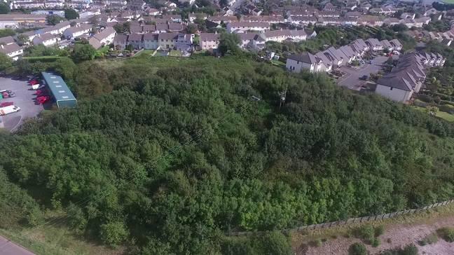 The woodland area before the trees were cut down. Credit: SWNS