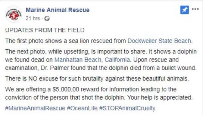 Credit: Facebook/Marine Animal Rescue