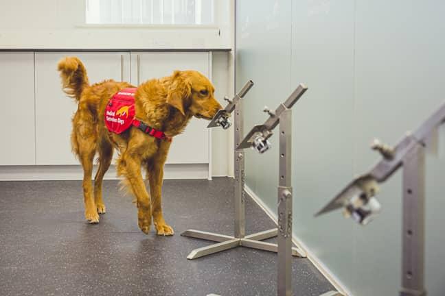What a good doggo. Credit: Neil Pollock/MDD via PA