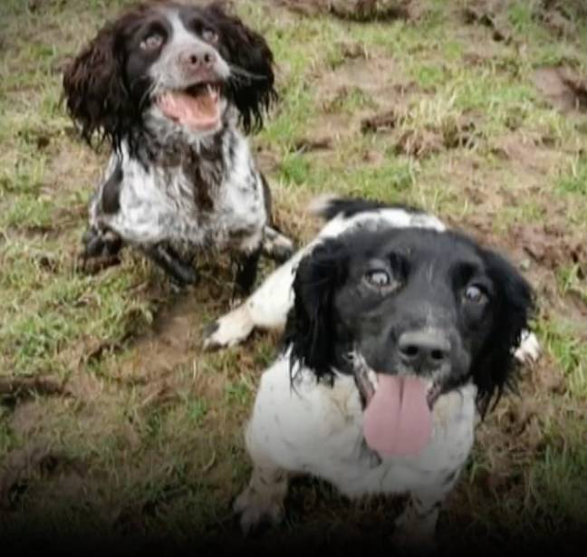 Many of the dogs have now been returned to their rightful owners. Credit: Wales News Service