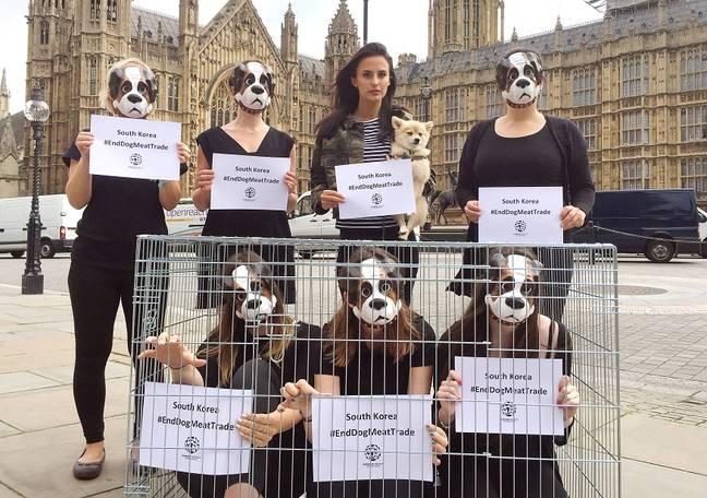 Protesters urge the UK government to encourage South Korea to end its dog meat trade. Credit: PA