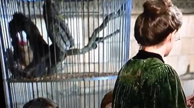 The misbehaving primate. Credit: Warner Bros