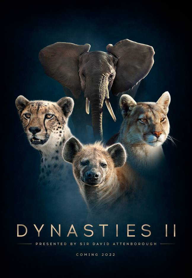 Dynasties is returning for a second series. Credit: BBC