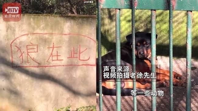 Credit: Weibo/Beijing Times