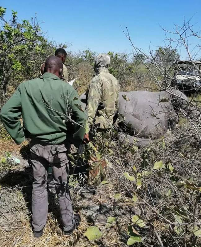 Some conservationists aren't convinced by the explanation. Credit: Botswana Safari News