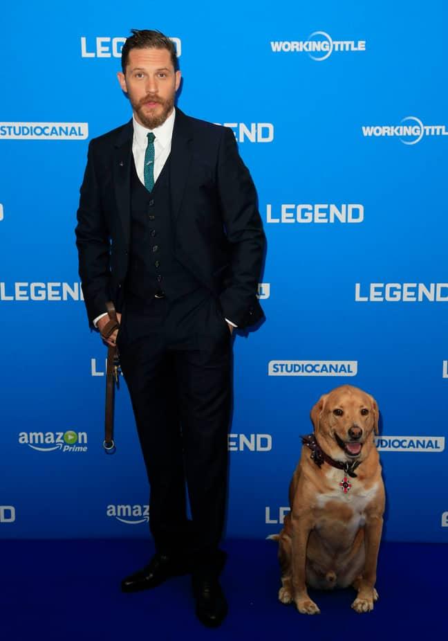 Tom Hardy's dog