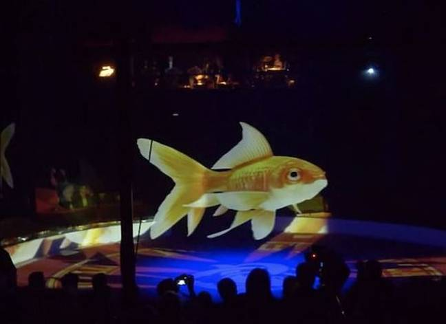 People are loving the idea of using projections of animals. Credit: YouTube/Optoma EMEA