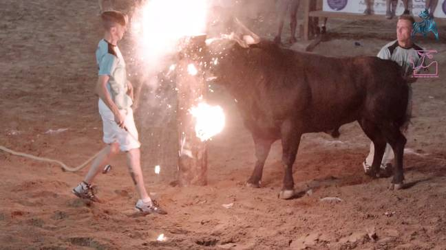 The bulls were attached to metal braces that were then set on fire. Credit: Pen News