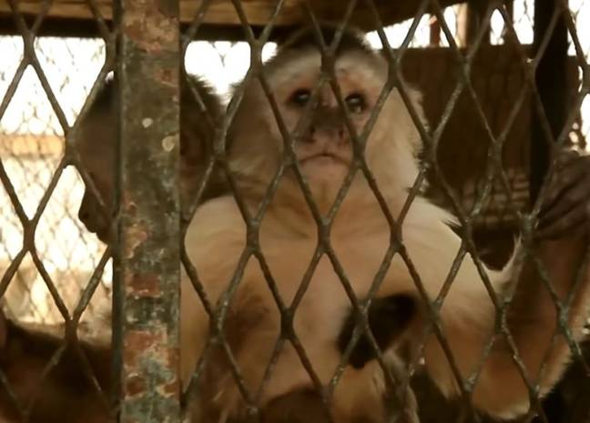 Wild animals live in the prison. Credit: Capitolio