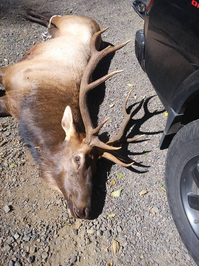 The animal was killed. Credit: Oregon State Police
