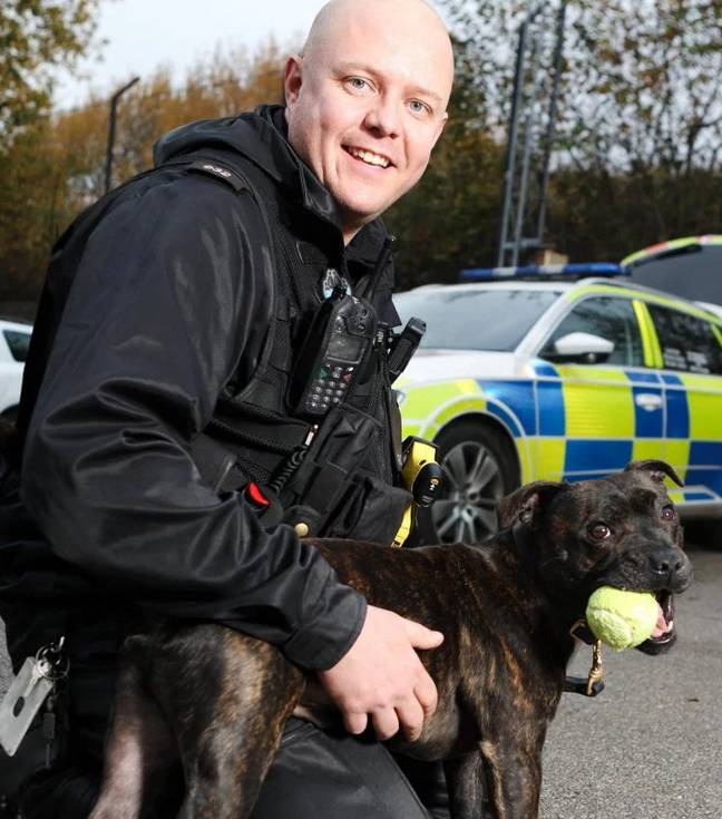UK's First Staffie Police Dog Is Breaking Down Negative Stereotypes. Credit: Caters