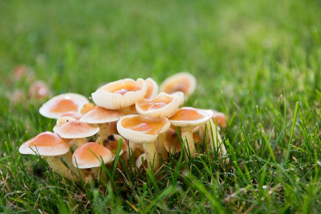 The 30-year-old man was rushed to hospital two days after injecting himself with 'magic mushrooms'. Credit: Pikist