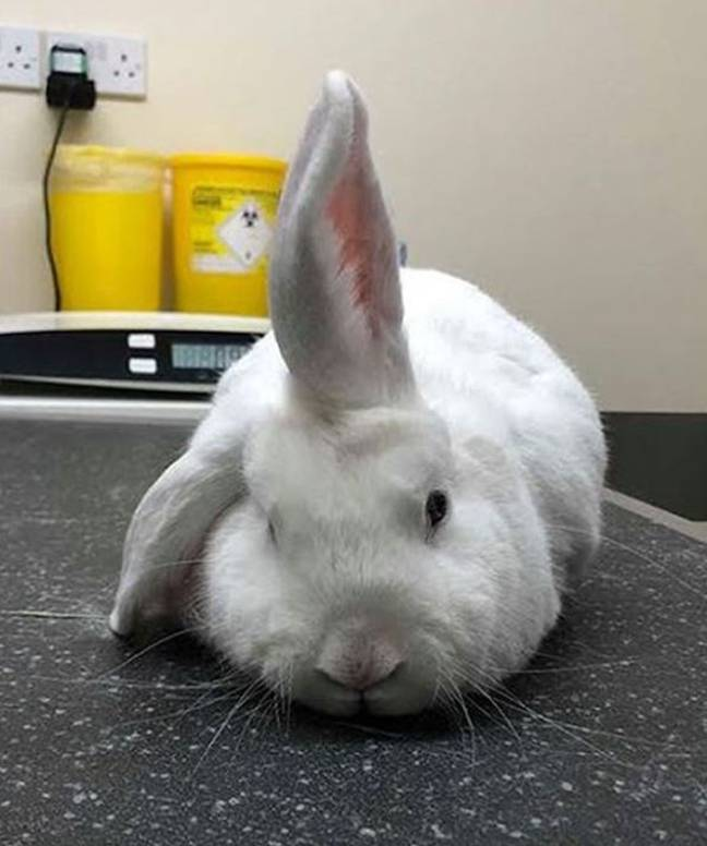 Wonky has been likened to a unicorn because of his ear. Credit: RSPCA/PA