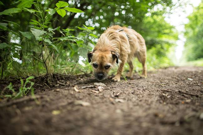 You should head straight to a vet if your dog displays signs of toxicity poisoning. Credit: PA