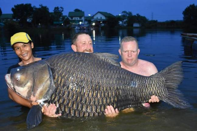 Mr Harvey has broken the record for the heaviest Siamese carp ever caught. Credit: John Harvey