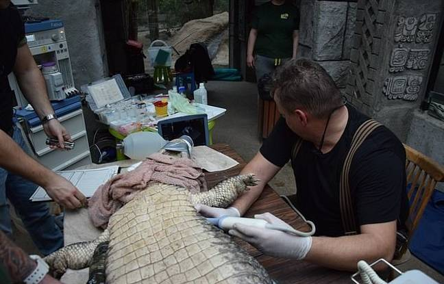 Specialist vets eventually found out what the trouble was. Credit: CEN/Zoo Poznan