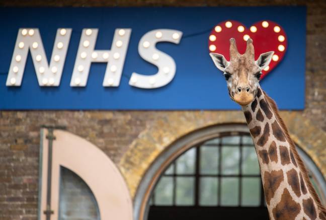 London Zoo and Whipsnade Zoo are looking for volunteers. Credit: PA