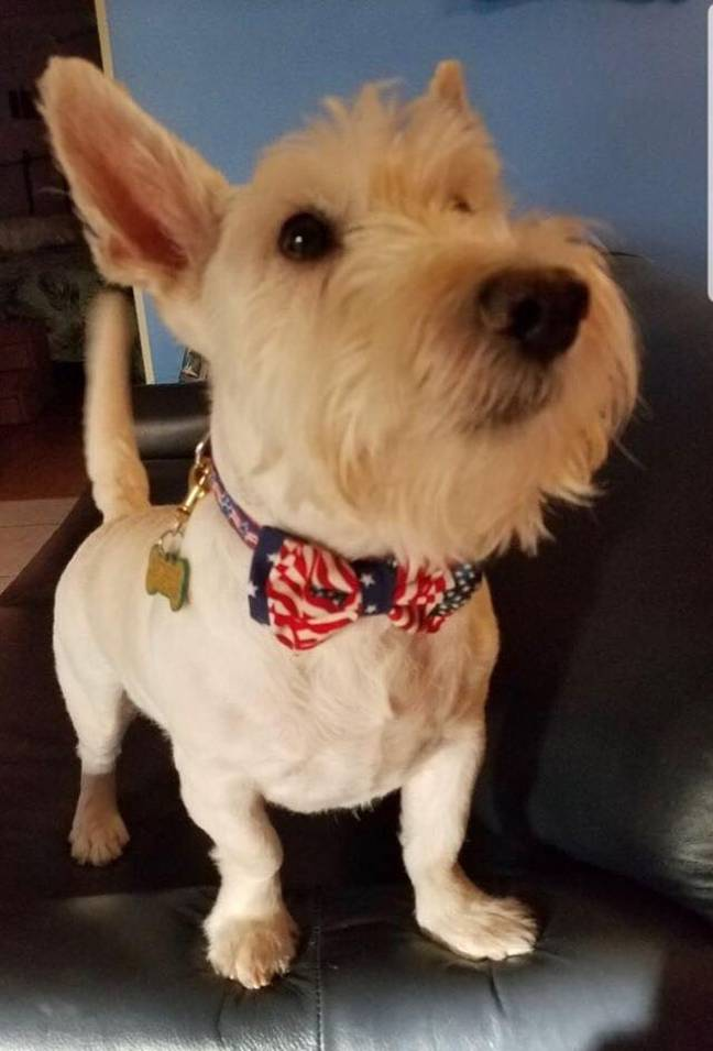 One of the adorable dogs wearing a bow tie. Credit: Darius Brown