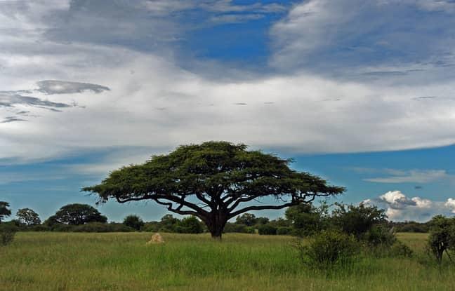 Hwange National Park. Credit: PA