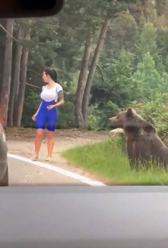 The woman got out of her car and approached the bear. Credit: TikTok/@alessandrobacaoanu