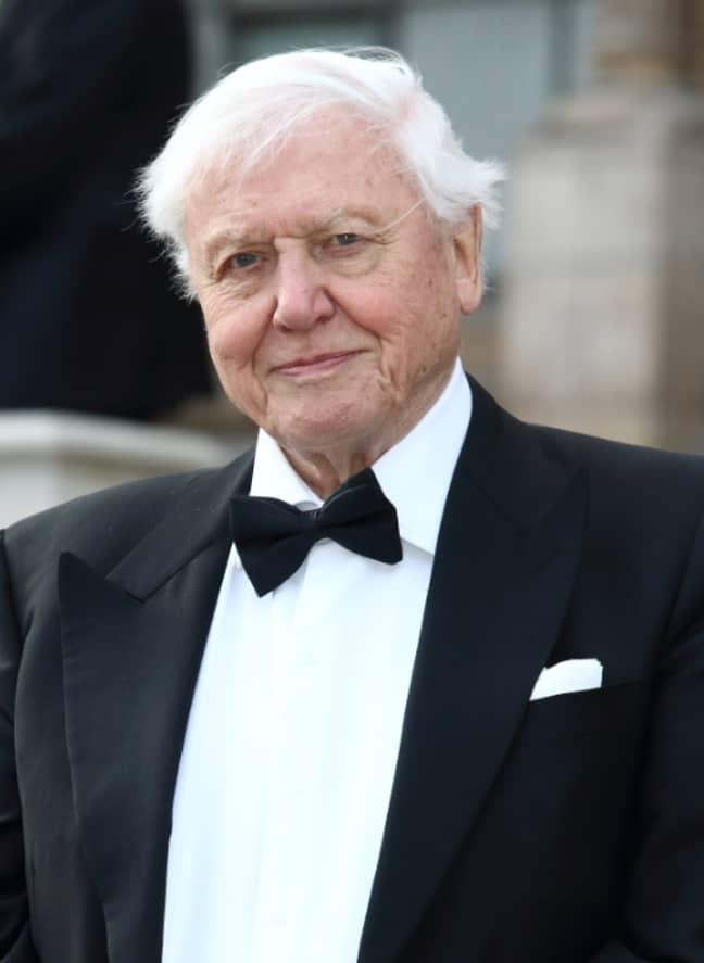 Sir David Attenborough. Credit: PA