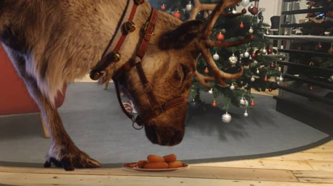 Credit: Reindeer Ready Live