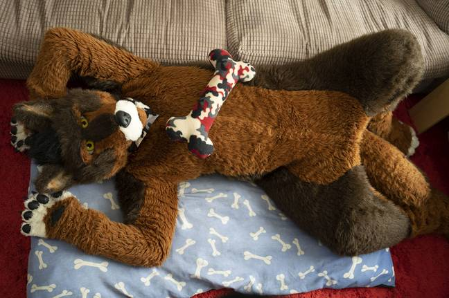 Kaz relaxing in his custom-made fur suit. Credit: Kennedy News and Media