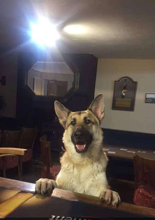Bonny, Davinia's dog. Credit: Mercury News