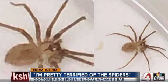 Thankfully, the venomous spider didn't bite Susie. Credit: 41 Action News