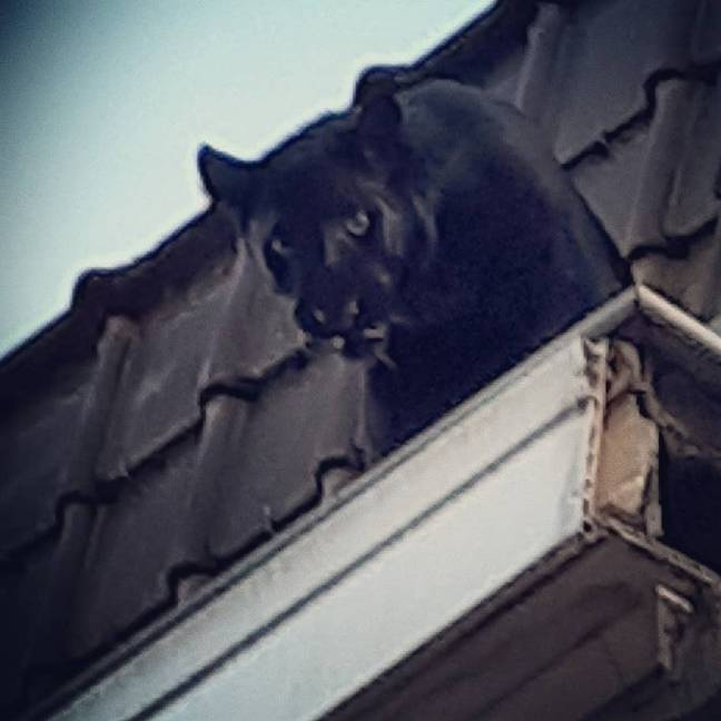 The panther walked into an apartment in the building. Credit: French Fire Service