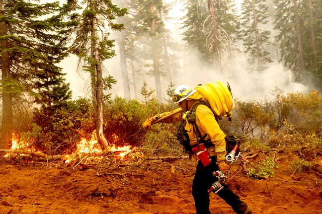 Wildfires in California may have driven the birds to migrate prematurely. Credit: PA