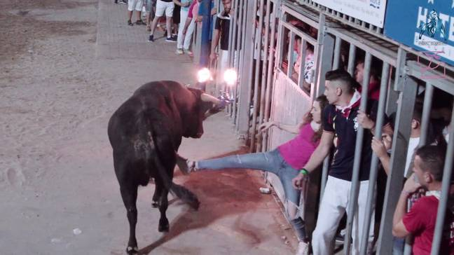 Spectators kicked the bulls from behind specially designed cages. Credit: Pen News