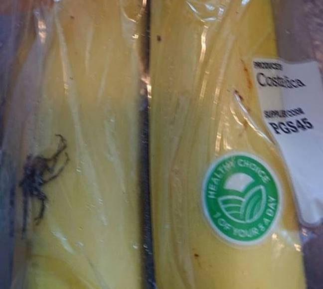Geoff discovered the 'deadly spider' in his packet of bananas from Tesco. Credit: Geoff Greenwood/John Siddle