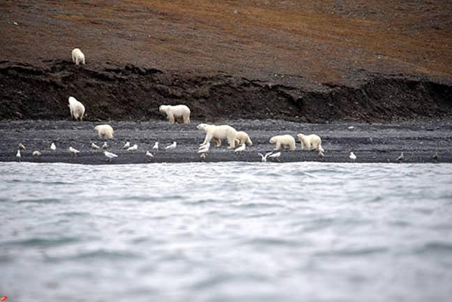 Credit: A.Gruzdev/Wrangel Island State Nature Reserve