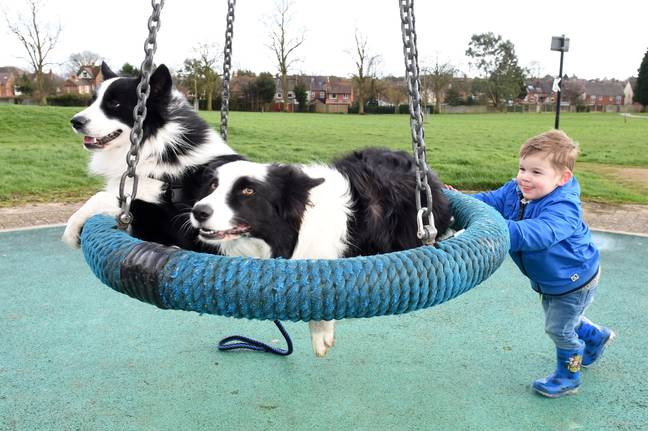 Jenson pushes Fenn and Nova on the swing in the park. Credit: Caters