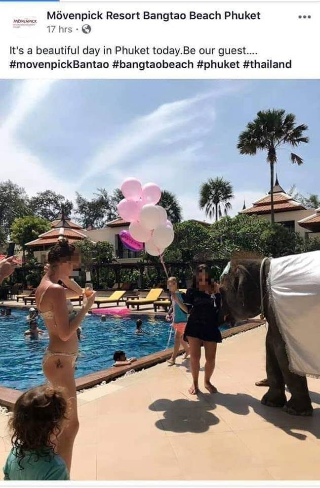 The photo appears to show an elephant being forced to entertain at a party. Credit: Mövenpick Resort Bangtao Beach
