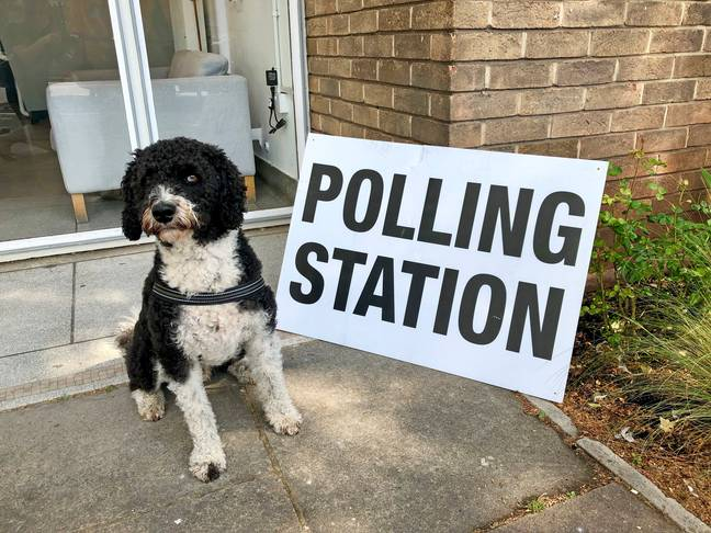 I may or may not be able to guarantee each polling station has a doggo outside it. Credit: PA