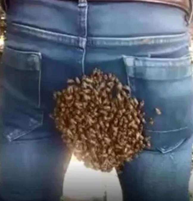 Bees swarm on man's bum