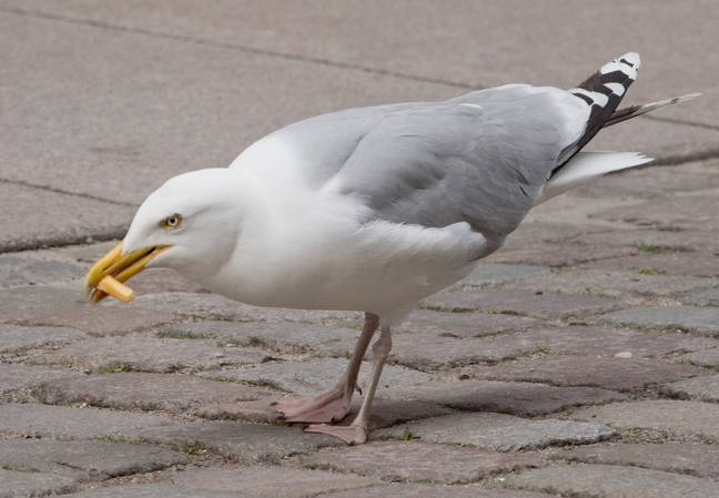 Why seagull, why? Credit: PA