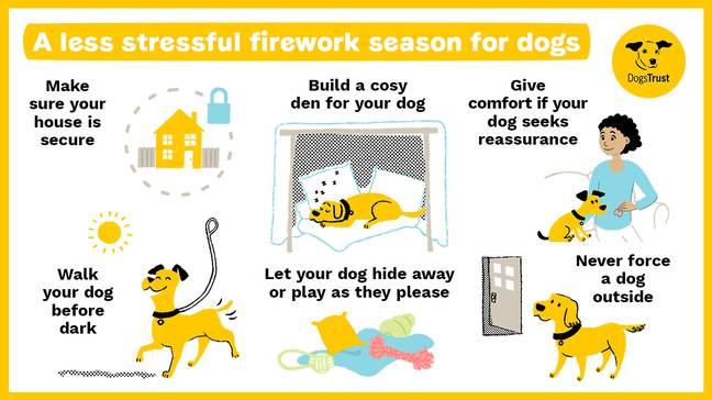 There are steps you can take to help minimise your dog's distress. Credit: Dogs Trust
