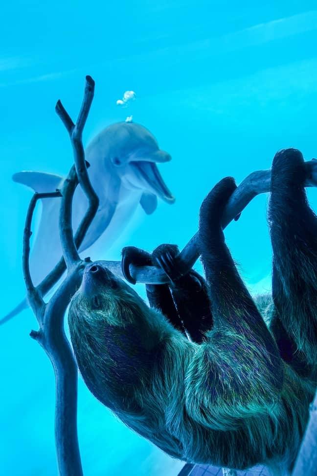 Credit: Texas State Aquarium