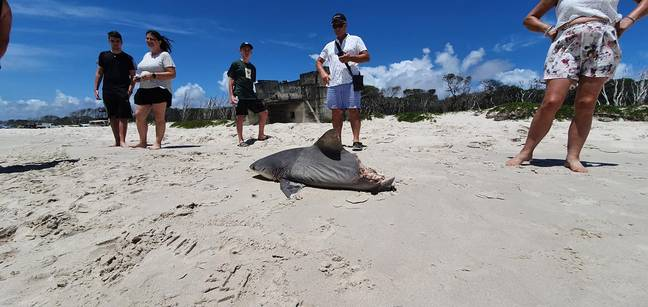 Tourists came across the dead shark during a tour of Birbie Island. Credit: G'Day Adventure Tours