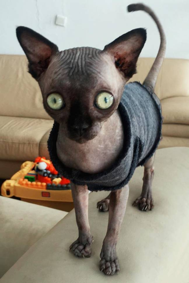 Lucy the cat has found viral fame. Credit: Storytrender
