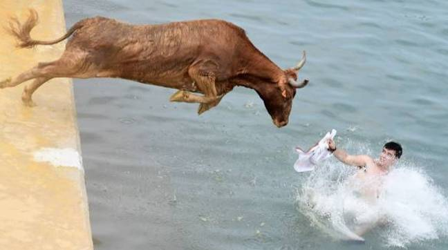 A white flag is held to goad the animal into the sea. Credit: Getty