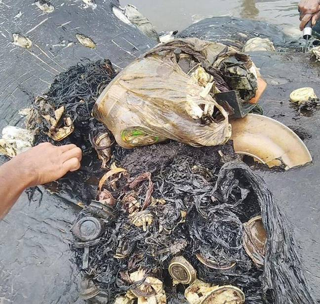 Dead whale had 1,000 pieces of plastic in its stomach. Credit: WWF Indonesia