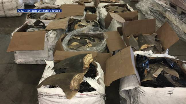 The fins were discovered in falsely declared boxes. Credit: US Fish and Wildlife Services