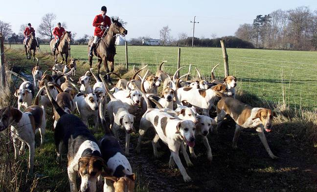 A stock image of a hunt. Credit: PA