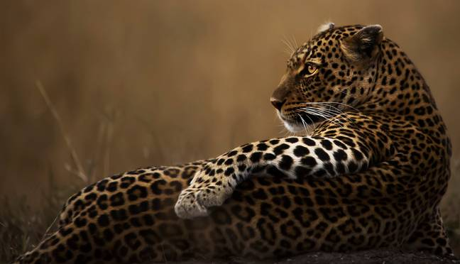 This one's called 'What a Poser', quite aptly. Credit: Wildlife Photographer of the Year/Clement Mwangi
