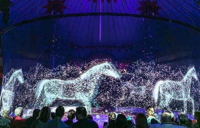 Horses, elephants and goldfish are mesmerising. Credit: YouTube/Optoma EMEA
