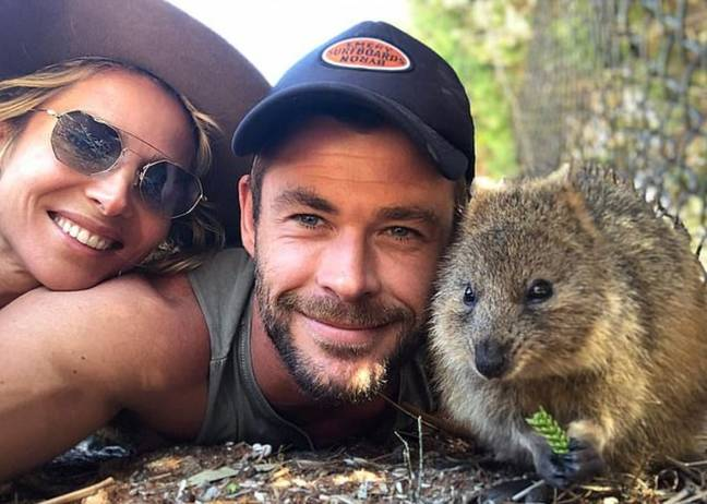 Chris, Elsa Pataky and the quokka playing happy families. Credit: Instagram/chrishemsworth